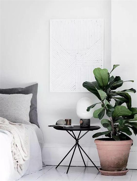 家庭植物摆放与风水