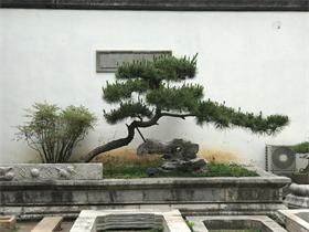 简约庭院其它实景图