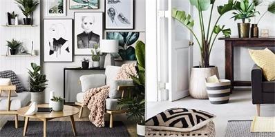 """简单绿植装饰 把冰冷的""""House""""变成温暖的""""Home"""""""