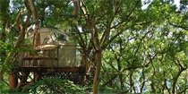 东京仿生茶亭建筑 像鸟儿一样栖息在树间