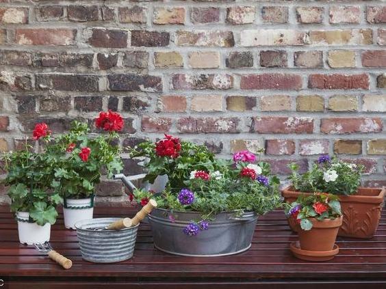 花卉位置摆放影响家居风水 你家的花卉摆放位置对吗?